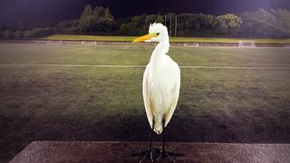 Patxi, el nuevo compañero de la FCBEscola Fukuoka